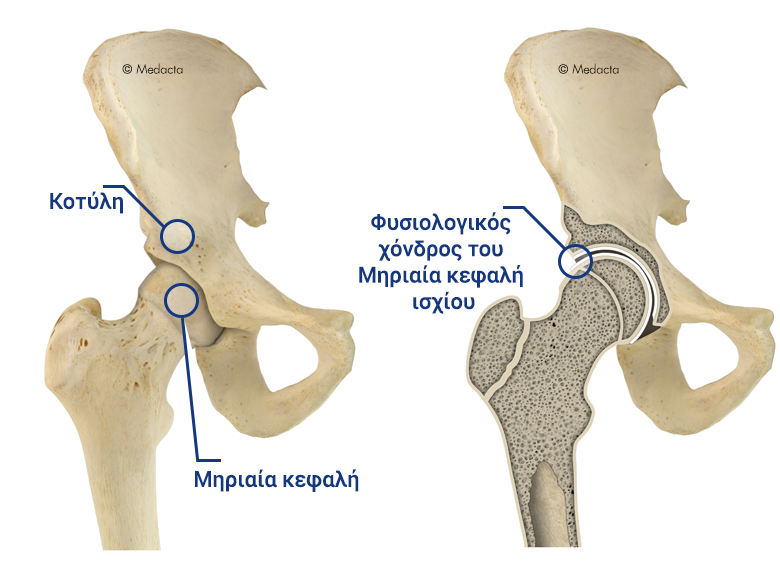 HIP_ANATOMY_Greco_Global_Big